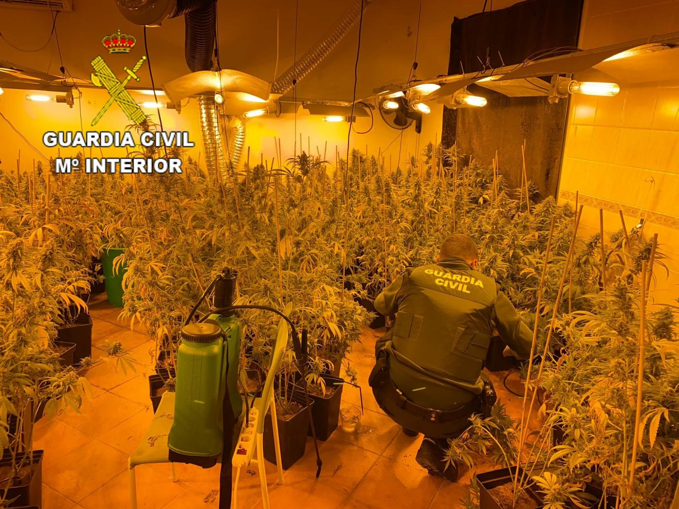 Plantación de marihuana encontrada por la Guardia Civil en Talavera. Europa Press