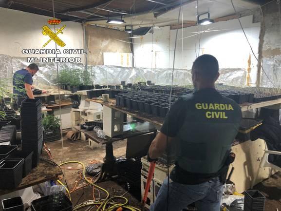 La Guardia Civil interviene más de 3.000 plantas de marihuana en Carmona (Sevilla)