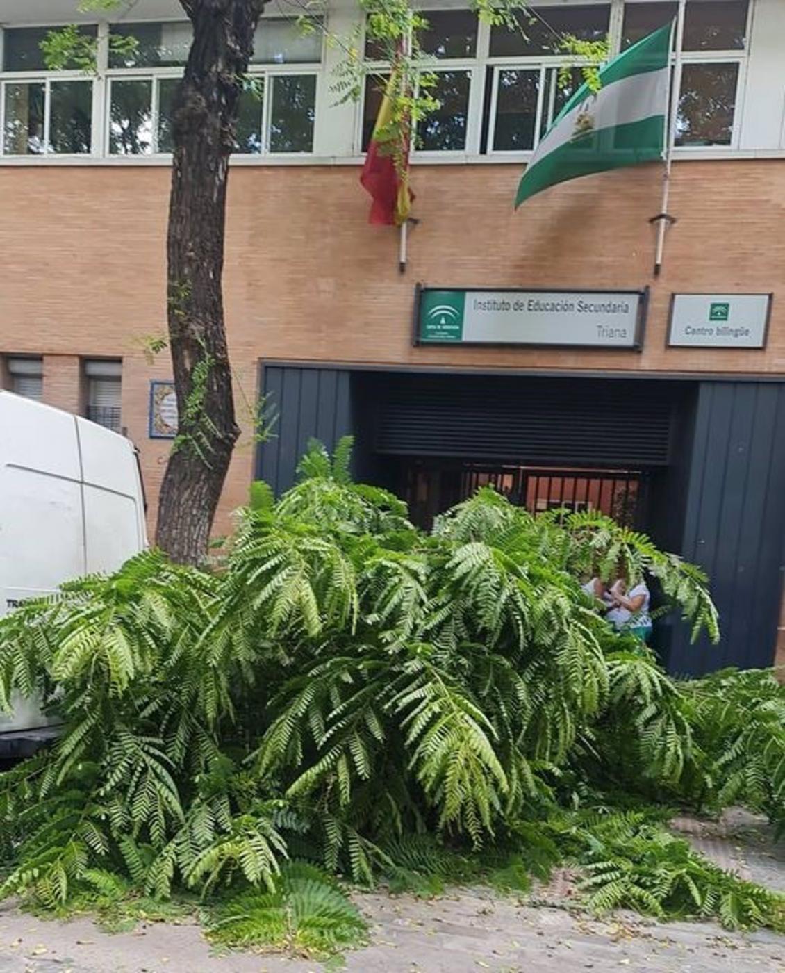Las fuertes rachas de viento provocan una veintena de incidencias por caídas de ramas